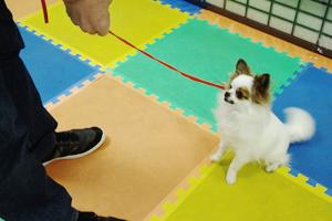 犬の預りトレーニング 完全予約制:お預かり期間30日~