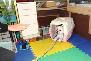 犬のしつけと健康管理について <予約制>