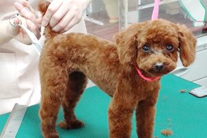 サロン一般犬コース(プロトリマー専任)