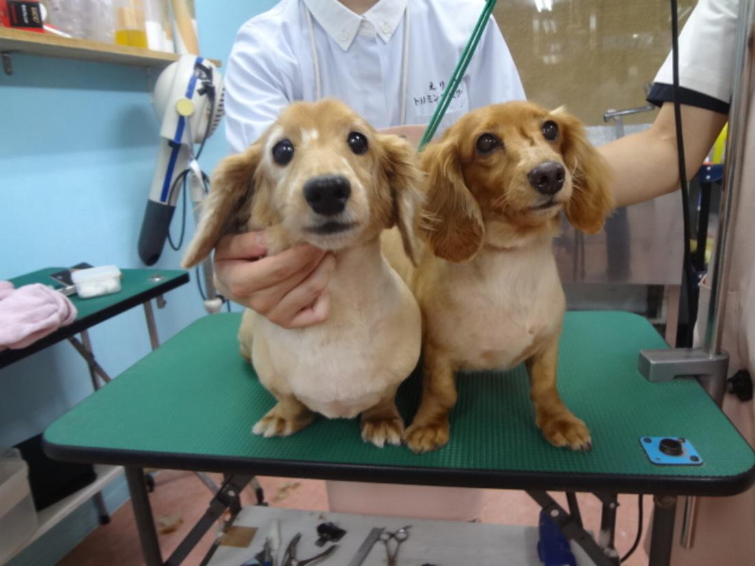 トリミング 犬達のシャンプー&カット 6のサムネイル
