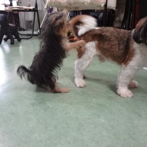 犬の幼稚園のサムネイル